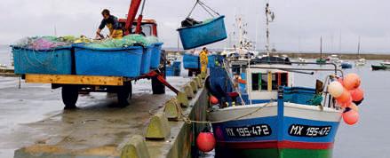 seafood loading