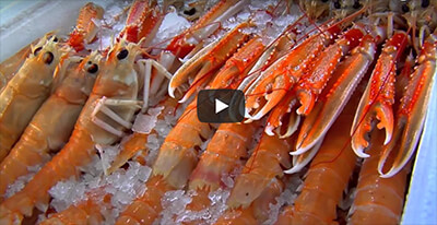VIDEO SEAFOODWAYS
